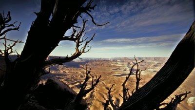 Juniper tree and view of Canyonlands NP,Utah