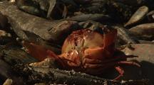 Dead Crab Amongst Dead Fish On Beach Ningaloo Reef Western Australia