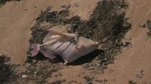 Mass Fish Die Off Dead Fish On Beach  Ningaloo Reef Western Australia