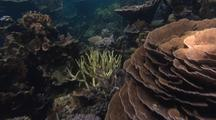 Coral Track Bleached Corals And Healthy Corals