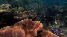 Coral Biodiversity Tracking Shot