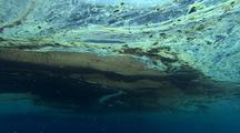 Coral Spawning Slick