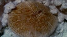 Close Up,Hard Coral Spawning Underwater at Night