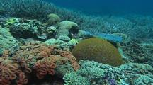 Diverse Hard Coral In Shallow Water