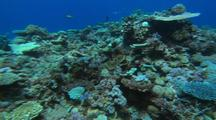 Gliding Over Coral Reef Following Fish School