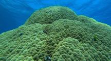 Old Deepwater Hard Coral Reef