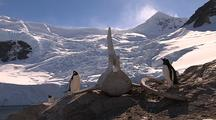 Gentoo Penguins With Whale Vertebrae Near Glacier