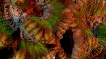 Coral Surreal & Luminous