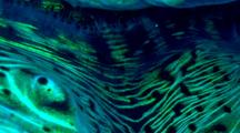 Clam Mantle, Macro, Bioluminescence