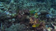Charismatic Emperor Fish amongst biodiversity