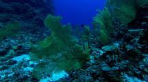 Sea Fans, Deep Water