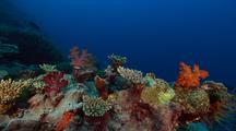 Diverse Soft Corals & Sea Fans, Deep Water