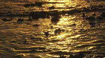 Golden Sunrise light reflections on water