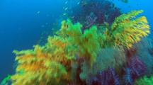 Fish & Soft Coral around Yongala Shipwreck