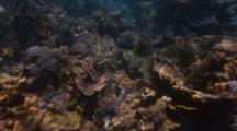 Hero Gliding Over Coral Biodiversity Tracking Shot Under Shimmering Light