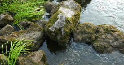 Walk on the stones in the mountain river in sunny day