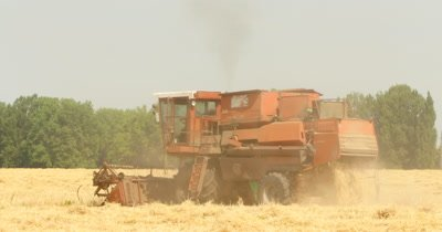 A red old combine harvester in a wheat field