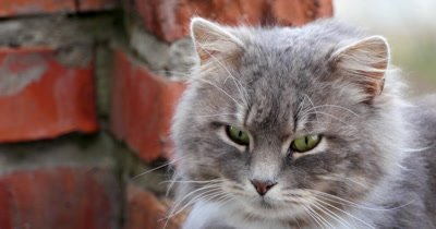 Muzzle of a cat close up