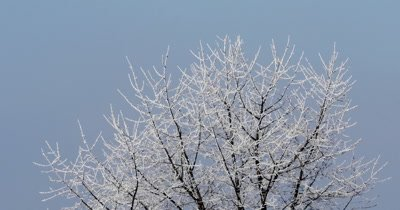 Winter morning in the mountains. Snow-covered tree branches against the blue sky