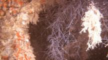 Close Up Of Hydroids