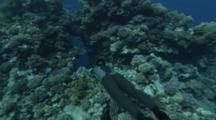 Free Diver Swimming Through Crevice Of A Coral Reef