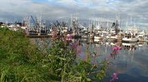 Pan Of A Boat Harbor/Fireweed Wildflowers