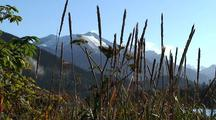 Beach Grass/ Southeast Alaska Beach/ Mountain Scenery