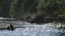 Morning Steam Rising Off A Log In A  River