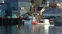 Commercial Fishing Boat (Long Line) Unloading Their Catch At A Fish Processors.