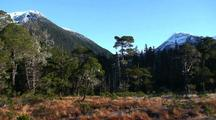 Muskeg, Shore Pine, Sphagnum Moss, And Mountain Scenery