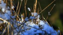 Alpine Weather- Snow On Grasses