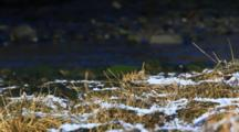 Alpine Weather- Snow On Grasses- Creek In Background