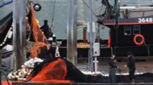 Commercial Fishing Net Repairing