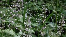 Wild Flower Seed Pod