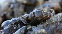Snails & Hermit Crabs