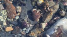 Snails & Hermit Crabs & Whelks