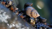 Snails & Whelks