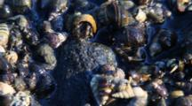 Whelks And Snails