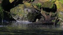 Algae On A Rocky Stream Shoreline