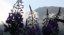Abstract: Silhouetted Fireweed And Moving Clouds