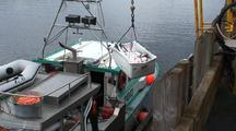 Unloading Halibut, Commercial Fishing Gear, Long Line Fishing, Commercial Fishing Boat