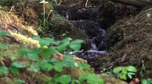 Water Runninng Through Moss And Forest Debris.