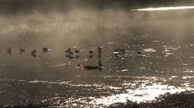 Birds (Ducks)Feeding In A Small Estuary  With Fog Drifting By.
