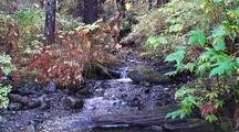 A Small Forest Stream.  Rain Forest, Moss, And Forest Debris.