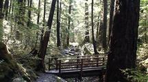 Trail /Foot Bridge
