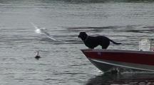 Alaska Radar.  A Dog Guiding The Way.