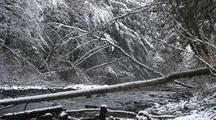 Mountain Stream & Falling Snow