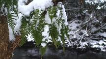 Winter Scene. A Mountain Stream, Ferns & Falling Snow.