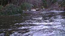 Winter Scene. A Mountain Stream.