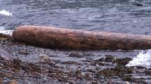 Storm Scene. A Log Rolling In A Storm Surge, And Surf.